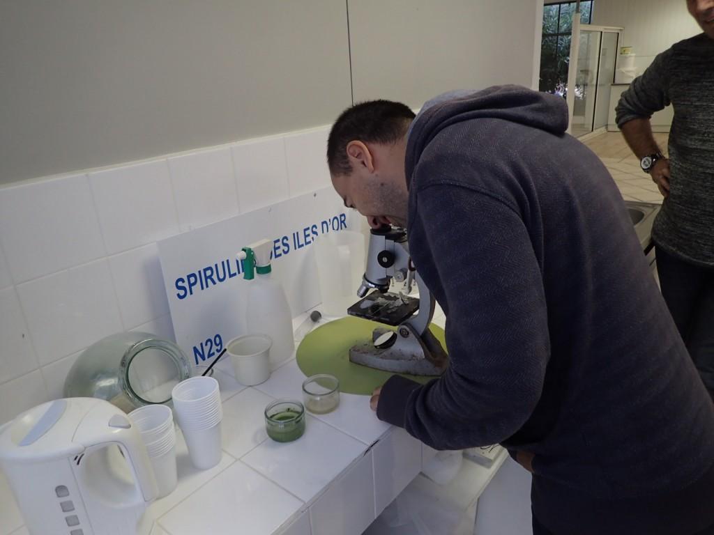 Greg observe la spiruline au microscope